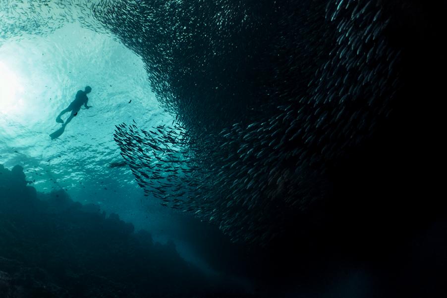 Fisch Schwarm Daten